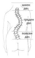 Сколиоза - атипично гръбначно изкривяване